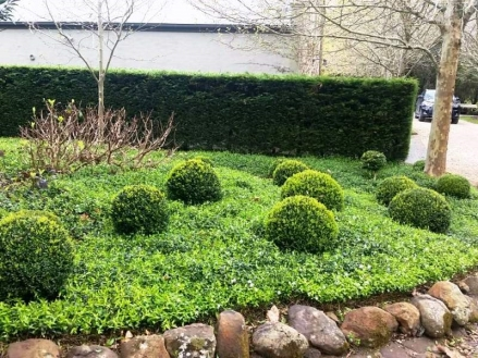 ... FIND THE CORRECT WAY OF CUTTING THE SHRUBS